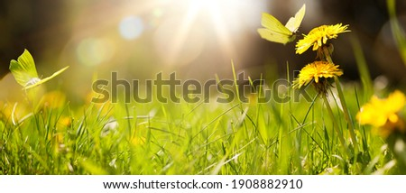 art abstract spring background or summer background with fresh grass Photo stock ©