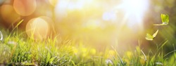 art abstract spring background or summer background with fresh grass and butterfly