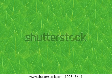 art  background with green  leaves   , abstract wallpaper