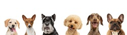 Art collage made of funny dogs different breeds posing isolated over white studio background. Concept of motion, action, pets love, animal life. Look happy, delighted. Copyspace for ad, flyer.