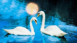 art collage with two swans on a night lake with full moon reflection