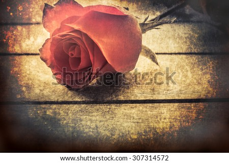Art of Rose for old love.noise and grunge.burn hot love