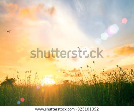 Art rural landscape. field grass. Abstract colorful green meadow with beautiful bokeh flare on orange autumn sunrise background. Ecology, Peaceful, Merry Christmas Card, Happy New Year 2016 concept