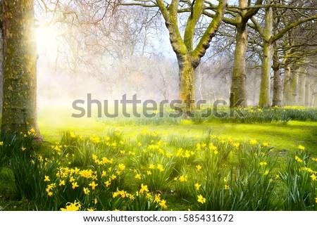 Shutterstock Art spring flowers in the park; Easter landscape