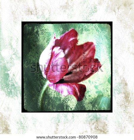 art vintage colorful background with pink tulip