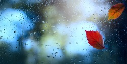 art wet autumn leaves background; autumn window with water drops and autumn leaf