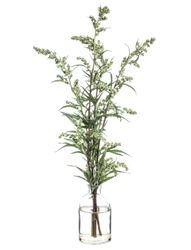 Artemisia vulgaris (common mugwort or riverside wormwood) in a glass vessel with water
