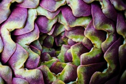 Artichoke photo macro