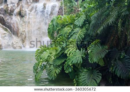 Artifical waterfall in the Jardin Botanique de Deshaies, Guadeloupe island