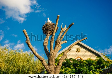 Artificial copies that accurately imitate white storks, a large nest mounted on a pole and twisted from tree branches
