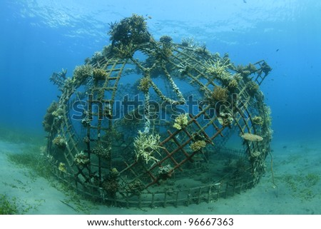 Artificial coral reef in the ocean
