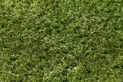 Artificial grass, abstract green background