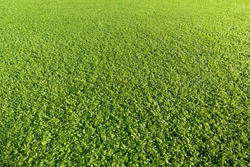 Artificial Grass Field in plastic material