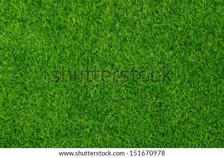 Artificial Grass Field Top View Texture