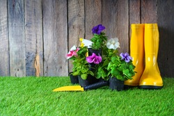 Artificial grass. Horticulture background with petunias flowers, shovel and rain boots.