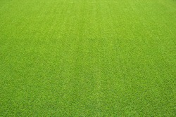 artificial grass perspective view