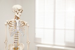 Artificial human skeleton model near window indoors. Space for text