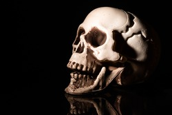 Artificial human skull on black background.