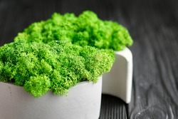 artificial moss in a gray cement stand in the shape of yin and yang on a dark background
