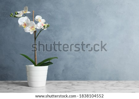 Artificial orchid plant in flower pot on white marble table. Space for text Photo stock ©