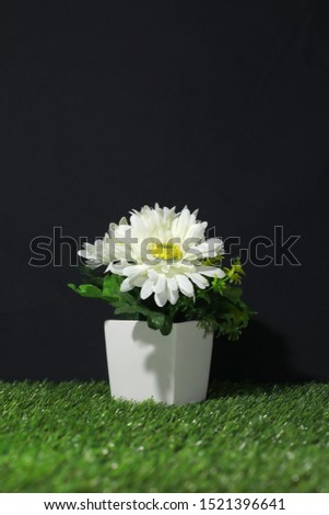 Artificial Plants or Artificial Grass on  Artificial grass for Home and Office Decoration without The Care. #1521396641