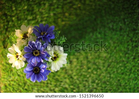 Artificial Plants or Artificial Grass on  Artificial grass for Home and Office Decoration without The Care. #1521396650