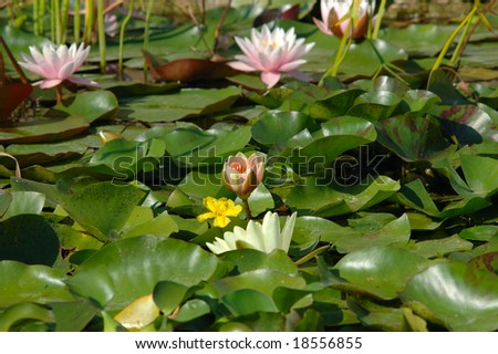 artificial pond with nenuphars - stock photo