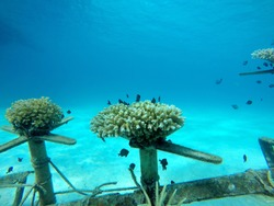 Artificial reefs in underwater areas that require a structure to enhance the habitat for reef organisms