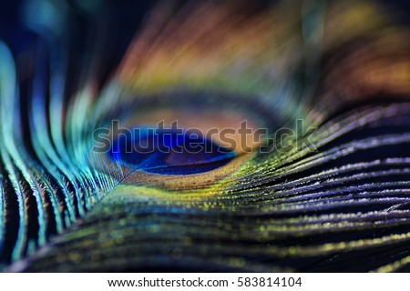 Artistic composition of macro Multicolored peacock feather