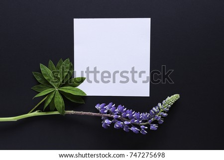Artistic mockup for your artwork with beautiful lupine flowers and leaves and empty card shot from the top. Flat lay minimalistic composition. #747275698