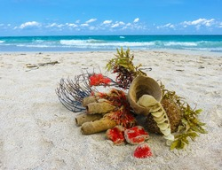 artistic natural sea still life - naturemorte made of sea plants and creatures, resting on a sandy beach of Varadero, Cuba