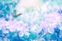 Artistic  pastel pink and blue toned image blooming apple tree flowers, butterfly, dreamy sunny background. Soft focus. Greeting gift card template. Spring delicate nature. Copy space.