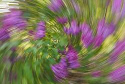 Artsy swirling motion blurred purple flowers