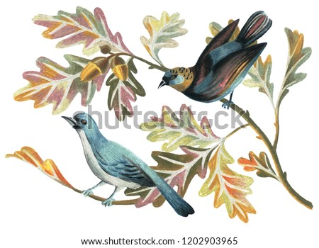 Artwork with birds, oak branches, leaves and acorns in vintage style. Nature illustration drawn by color pencils. Great for wedding decoration, gift boxes, wrapper, plates, cards, posters.