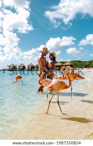 Aruba beach with pink flamingos at the beach, flamingo at the beach in Aruba Island Caribbean. A colorful flamingo at beachfront, couple men and woman on the beach mid age man and woman