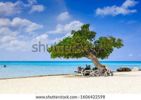 Aruba, Netherlands Antilles. Divi divi tree on the beach. Photo stock ©