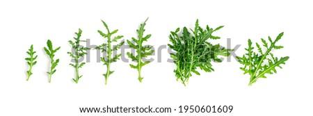 Arugula isolated. Fresh arugula set, ruccola leaves collection, rucola, eruca or garden roquette Сток-фото ©