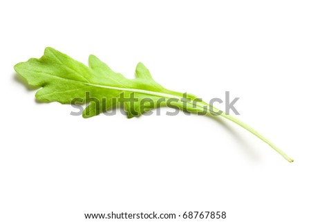 arugula leaves on white background