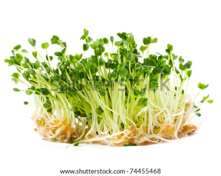 arugula sprouts on a white background
