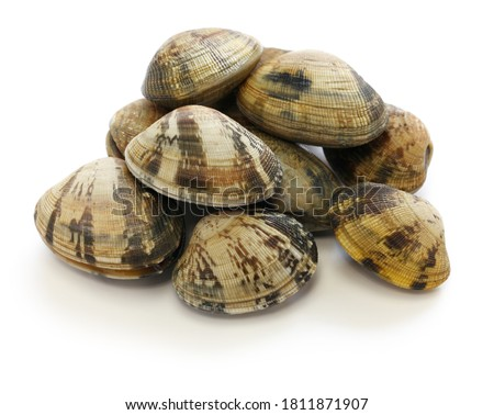 asari clams, It's a kind of clam that's popular in Japan. Сток-фото ©