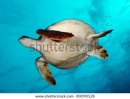 Ascending Underside of Turtle