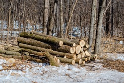 Ash trees have become Montreal's 15-million-dollar-problem. The city has spent nearly that much in the last eight years fighting the infamous emerald ash borer, a beetle that kills ash trees.
