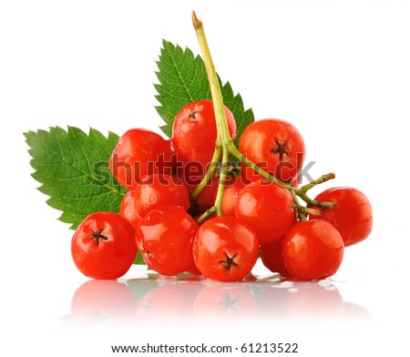 ashberry cluster with red berry and green leaf isolated on white background