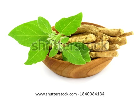 Ashwagandha Dry Root with Fresh Green Leaves in a Wooden Bowl, also known as Withania Somnifera, Ashwagandha, Indian Ginseng, Poison Gooseberry, or Winter Cherry. Isolated on White Background.