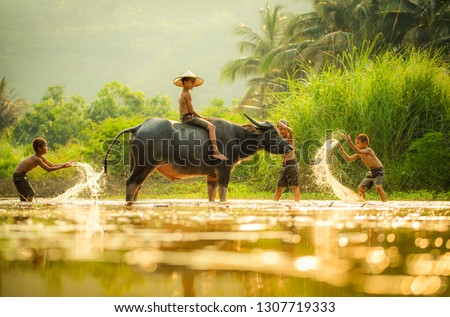 Asia children on river buffalo / The boys friend happy funny playing and shower animal buffalo water on river with palm tree tropical background in the countryside of living life kids farmer asian