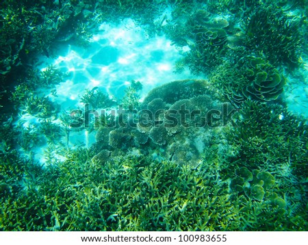asia coral in shallow water - stock photo