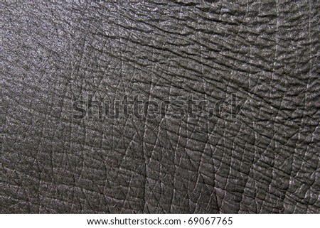 asia elephant skin