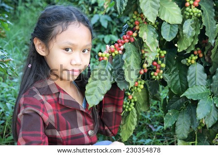 Asia girl in coffee plantations at Chiang mai, Thailand.