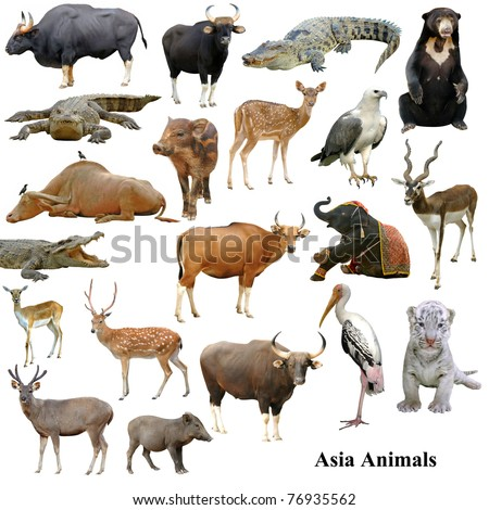 asian animals collection isolated on white background
