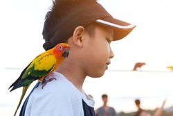 Asian boy playing with his pet parrot.
